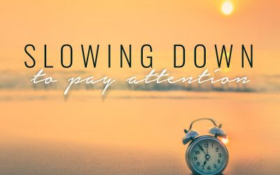 Slowing Down to Pay Attention – Werner Vos