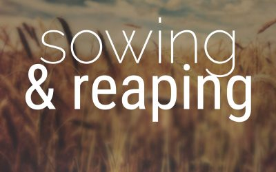 Sowing and Reaping – Neil Trollip
